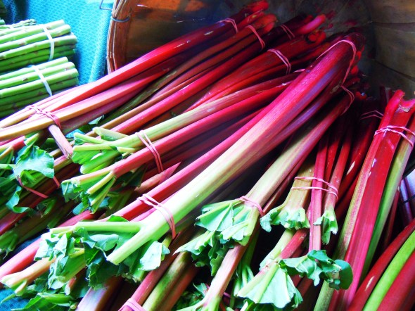 rhubarb at East York farmers market